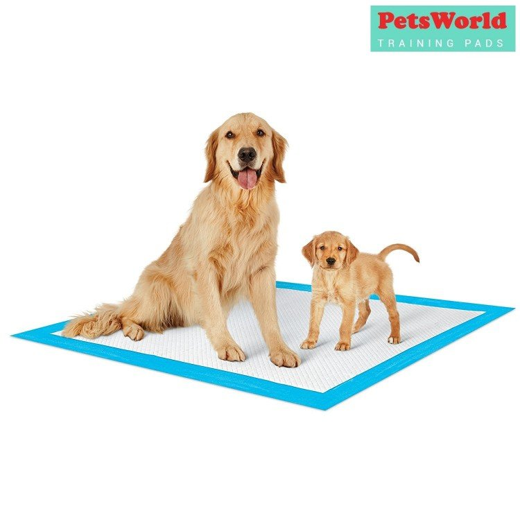 large puppy pad sample with 2 dogs on it